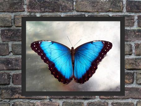 Verschönere deine Wohnung mit Schmetterlingen