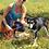 "Thumbnail: Dog Leash 6 Foot, Orange Marine Grade 3/8"" Line, Stainless Steel Hardware"