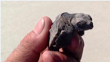Our Magical Sea Turtle Adventure