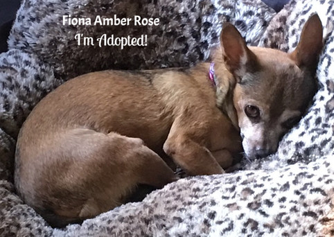 Fiona Amber Rose-Adopted