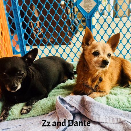 Zz and Dante