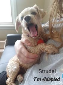 StrudelAdopted