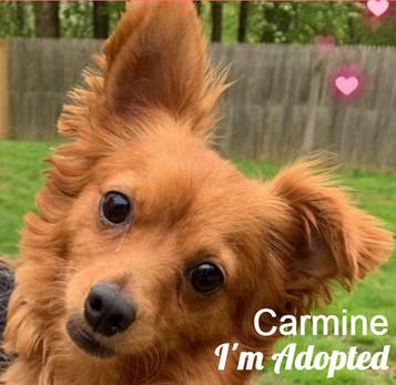 CarmineAdopted