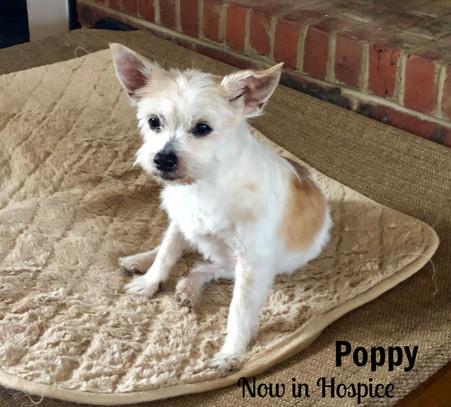 Poppy-Hospice