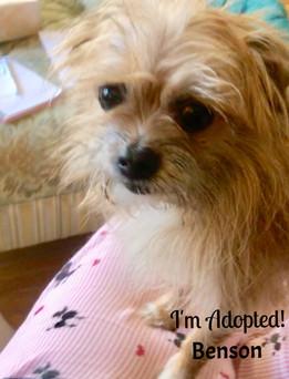 Benson-Adopted