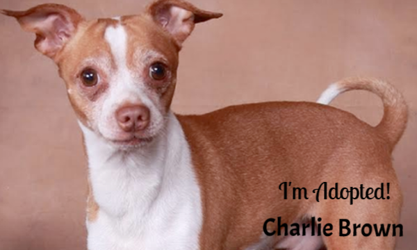 Charlie Brown-Adopted