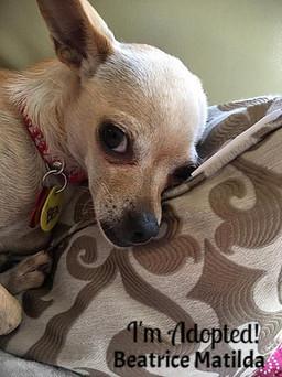 Beatrice Matilda-Adopted