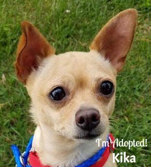 Kika-Adopted