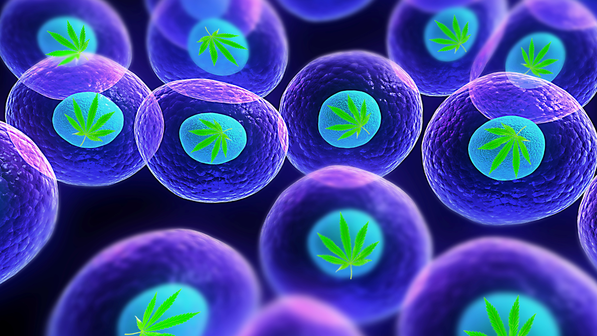 Weed & Human Cells Banner