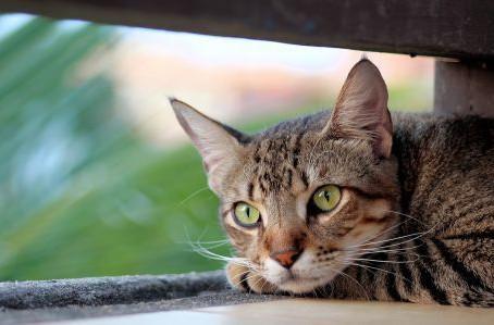 Минстрой откажется запрещать доступ кошек в подвалы
