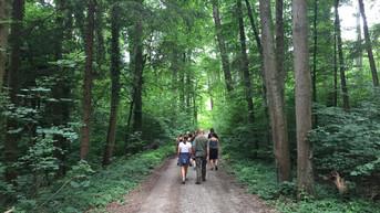 Auf dem Weg in den Wald - Inneres Feuer.