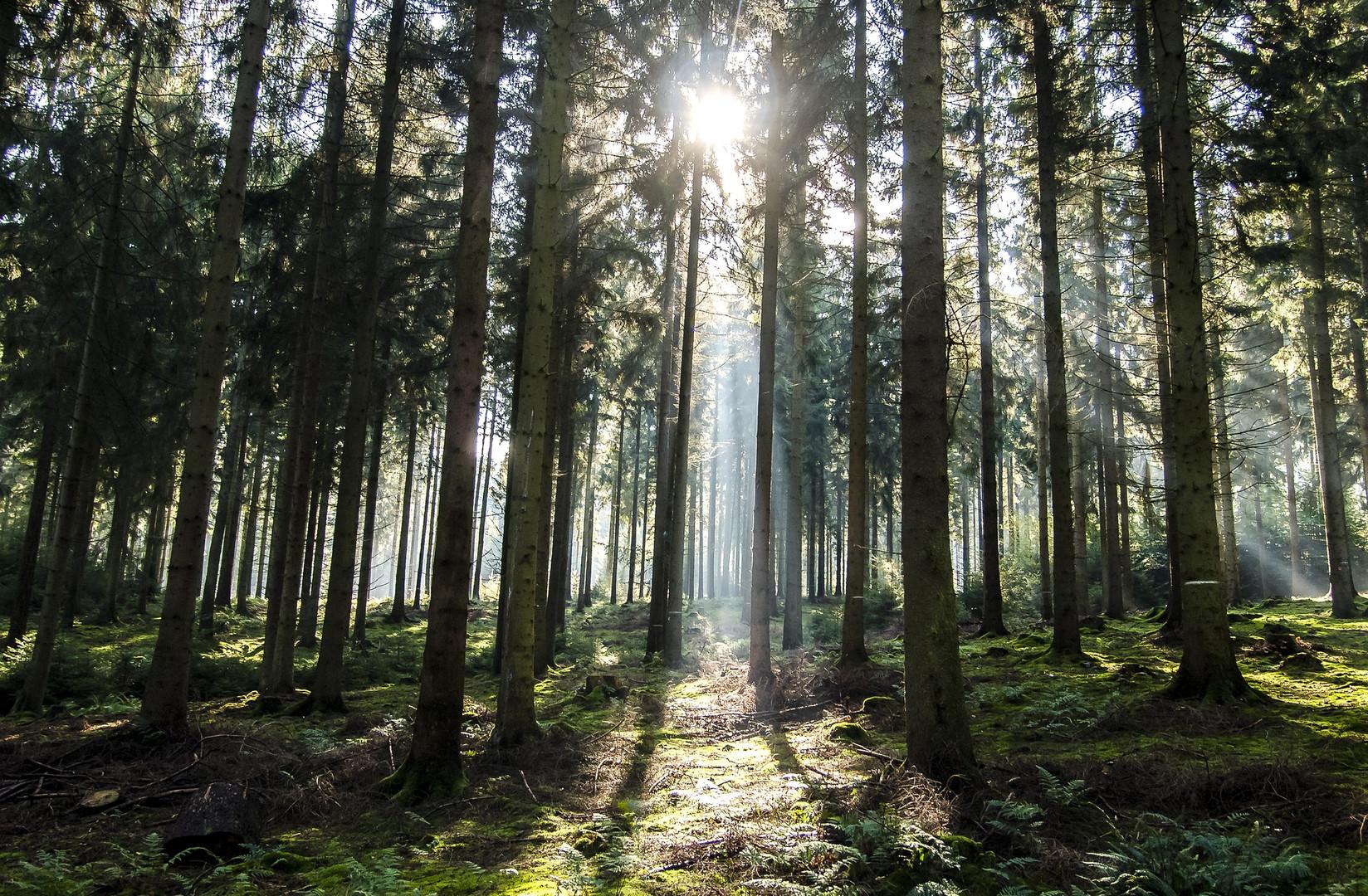 Wald durchflutet.jpg