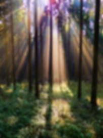forest-220719.jpg