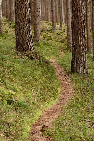 Weg in den Wald.jpg