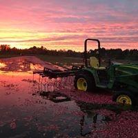 Cranberry harvest sunset