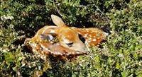 Northwoods Wildlife