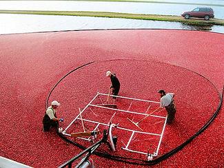 Corralling Cranberries