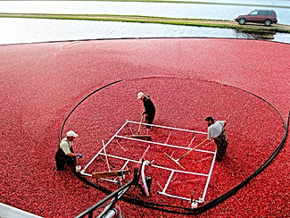 Corralling Cranberries