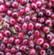 Shiny Cranberries