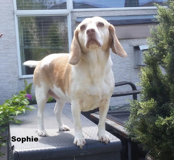 Sophie aka Psycho
