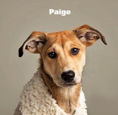 Paige aka Bitchy McBitch Face