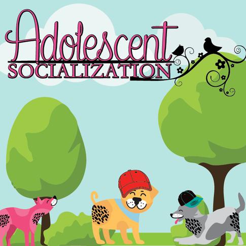 ADOLESCENT SOCIALIZATION