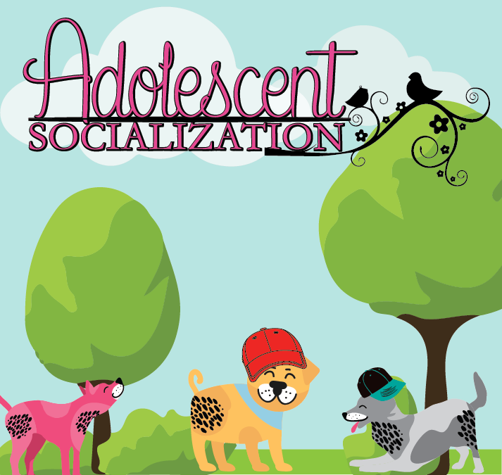 ADOLESCENT SOCIALIZATION