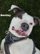 Bentley aka Ben