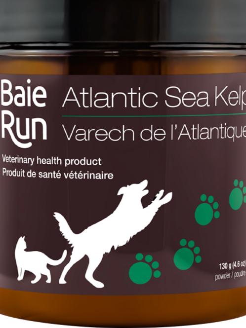 Baie Run Dog/Cat Atlantic Sea Kelp