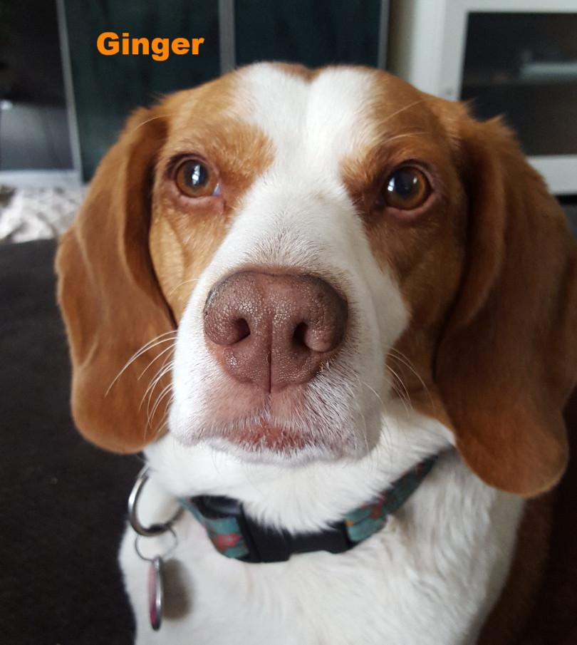 Ginger aka GinGin