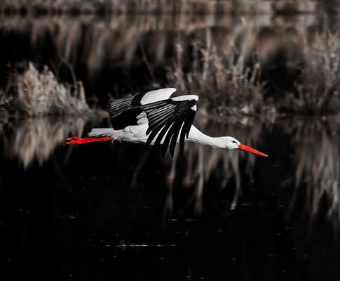 stork-4562168_1920.jpg