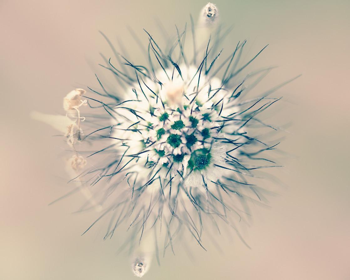 09_Intimate Flowers
