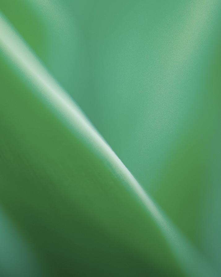 05_Leaf Detail.