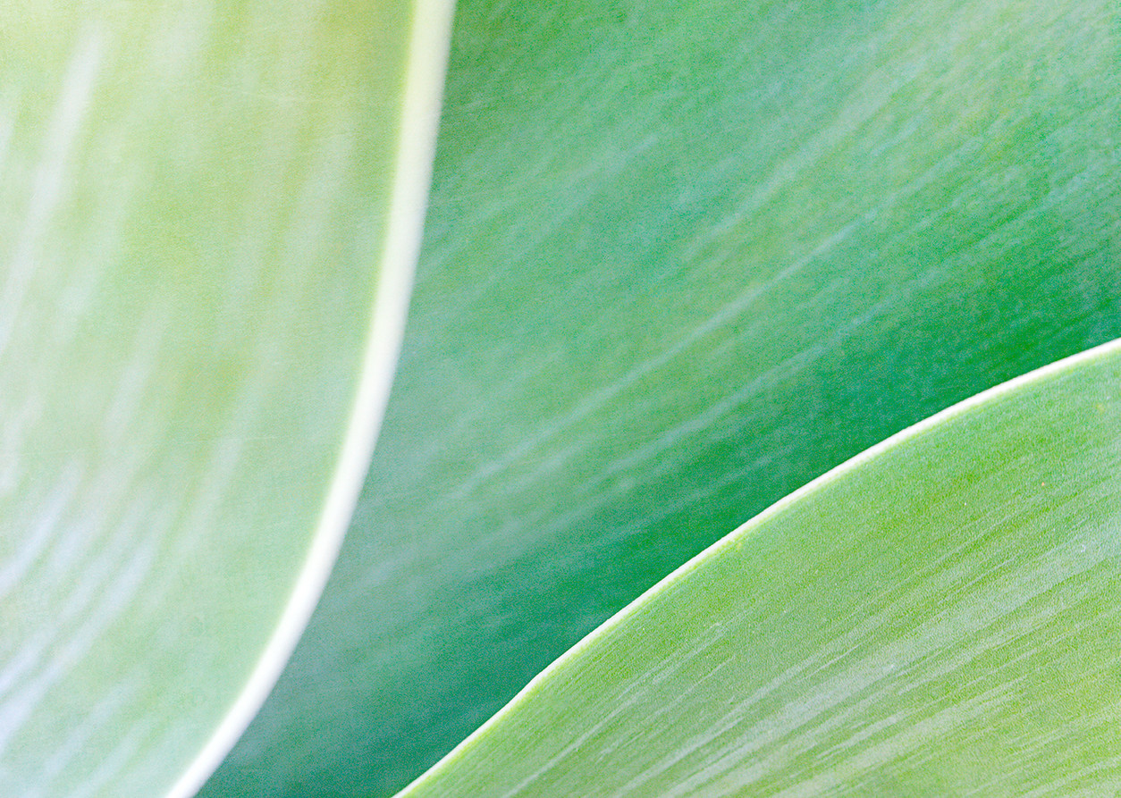 09_Leaf Detail.