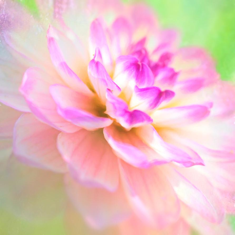 17_Intimate Flowers