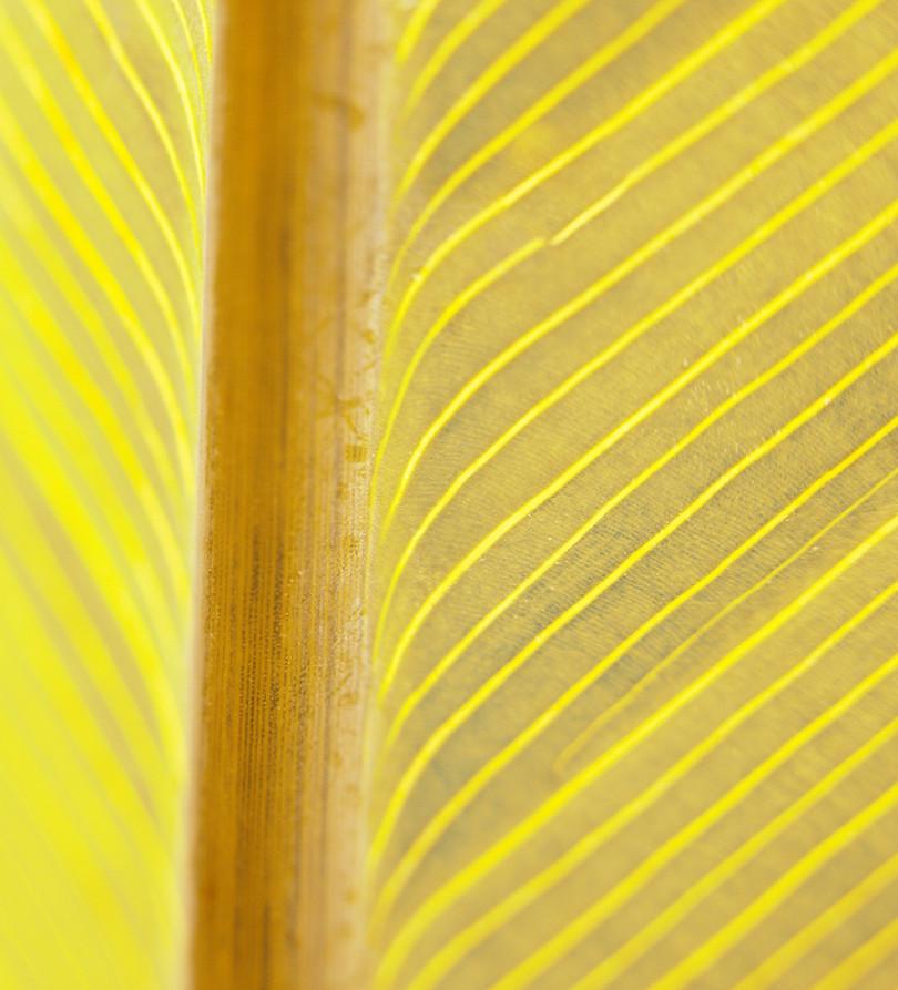 01_Leaf Detail.
