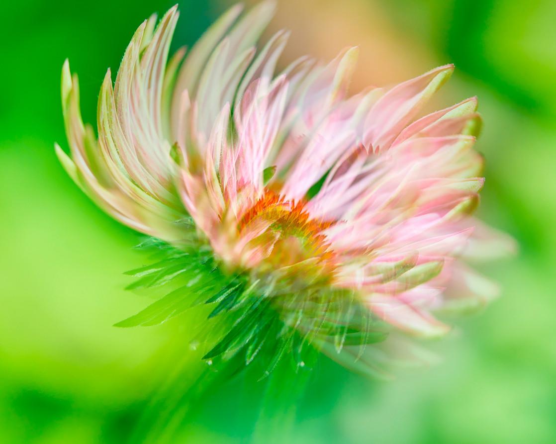 02_Intimate Flowers