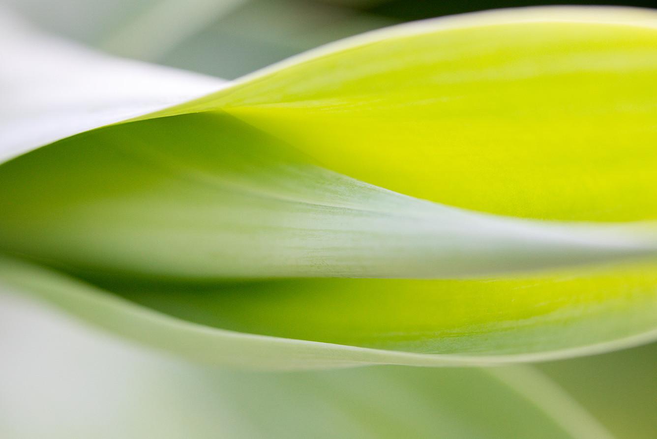 10_Leaf Detail.