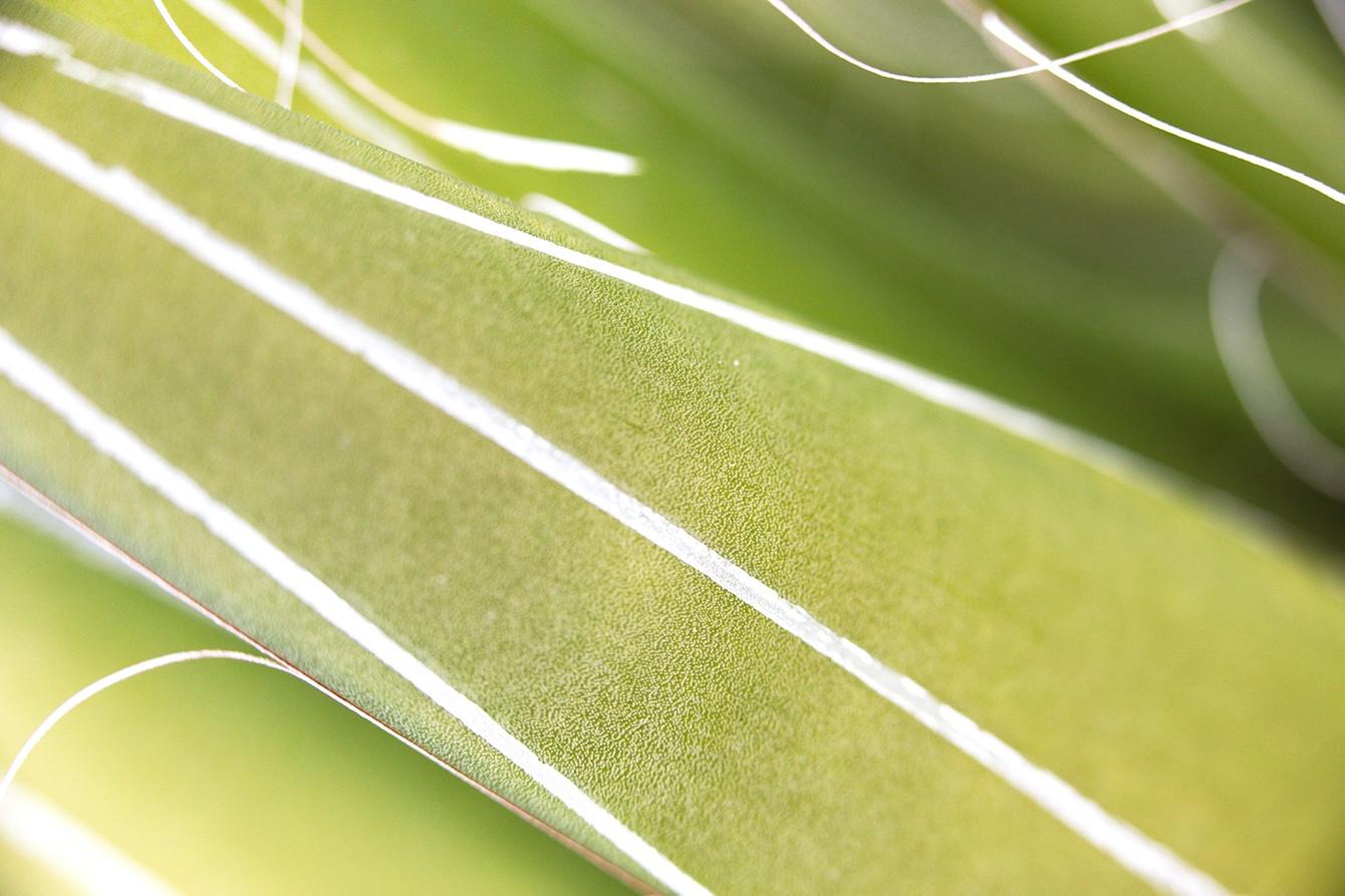 18_Leaf Detail.
