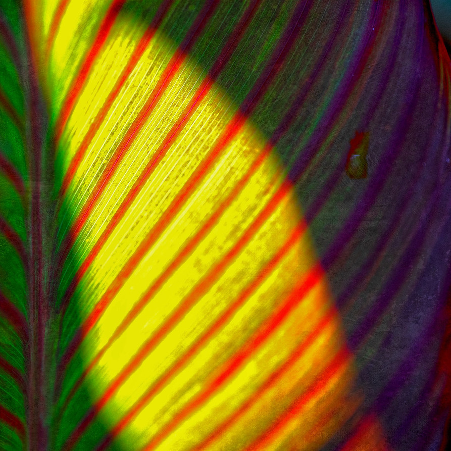 21_Leaf Detail.