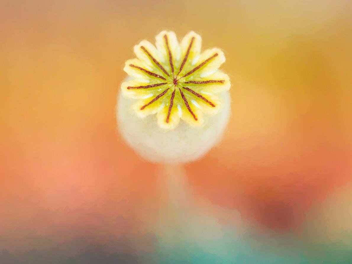 05_Intimate Flowers