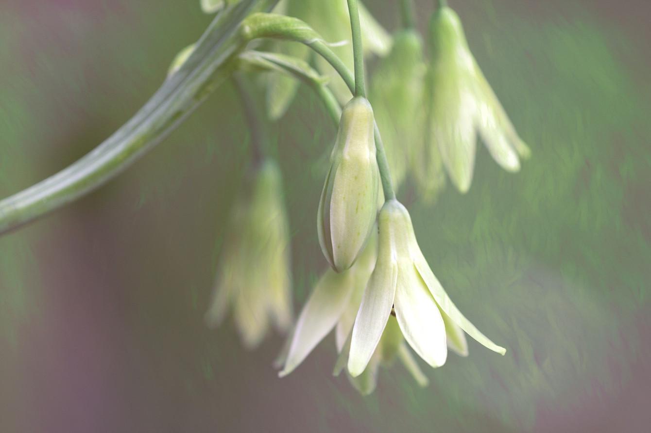 21_Intimate Flowers