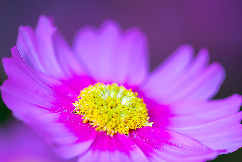 16_Intimate Flowers