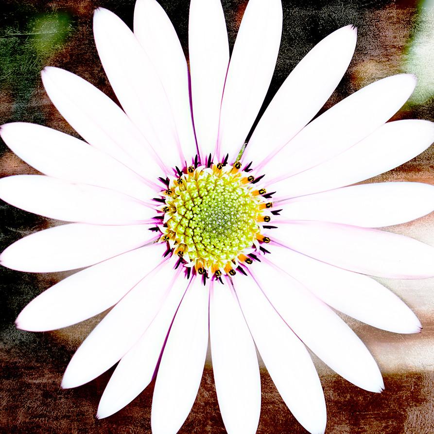 14_Intimate Flowers