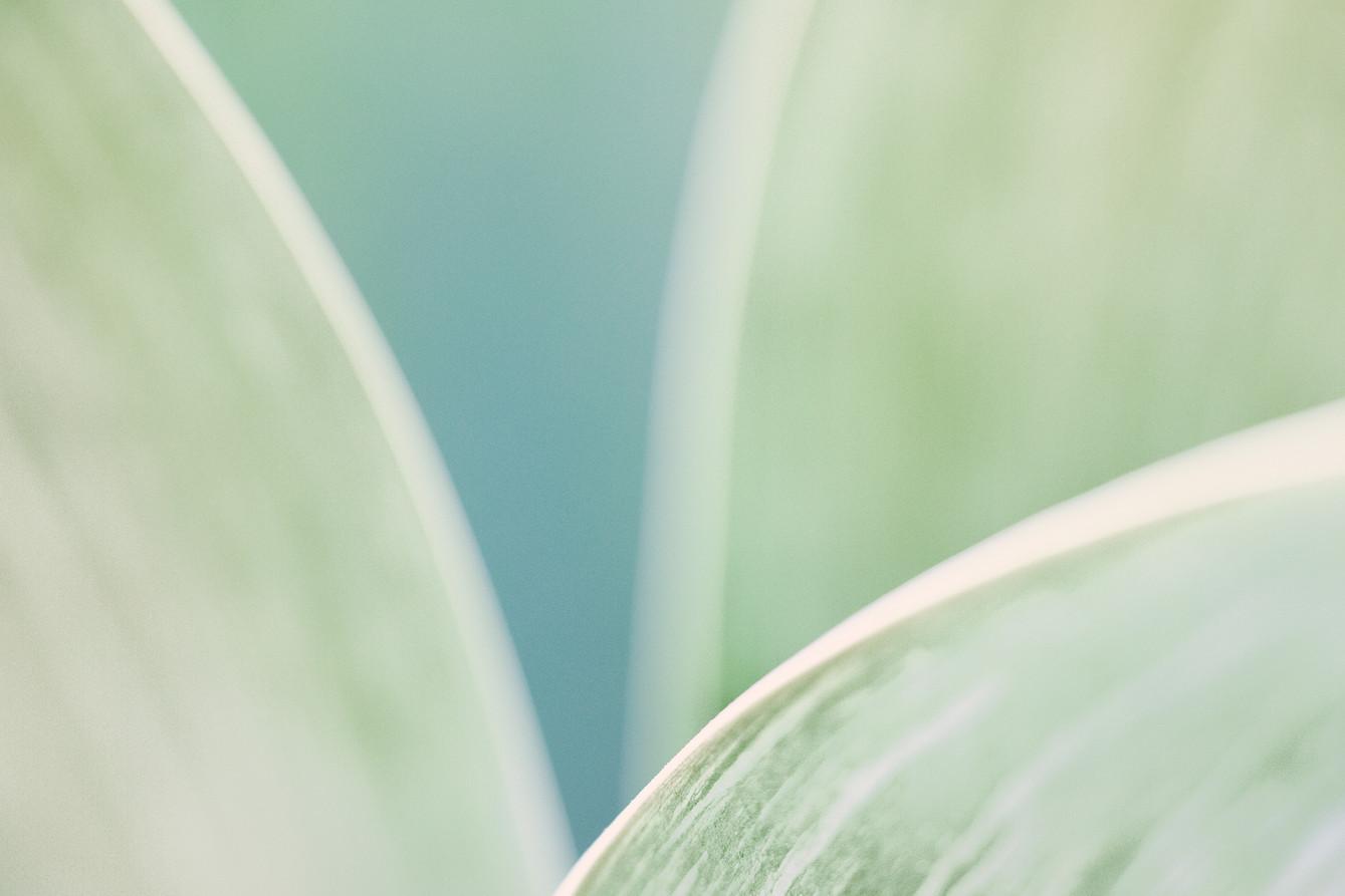 17_Leaf Detail.