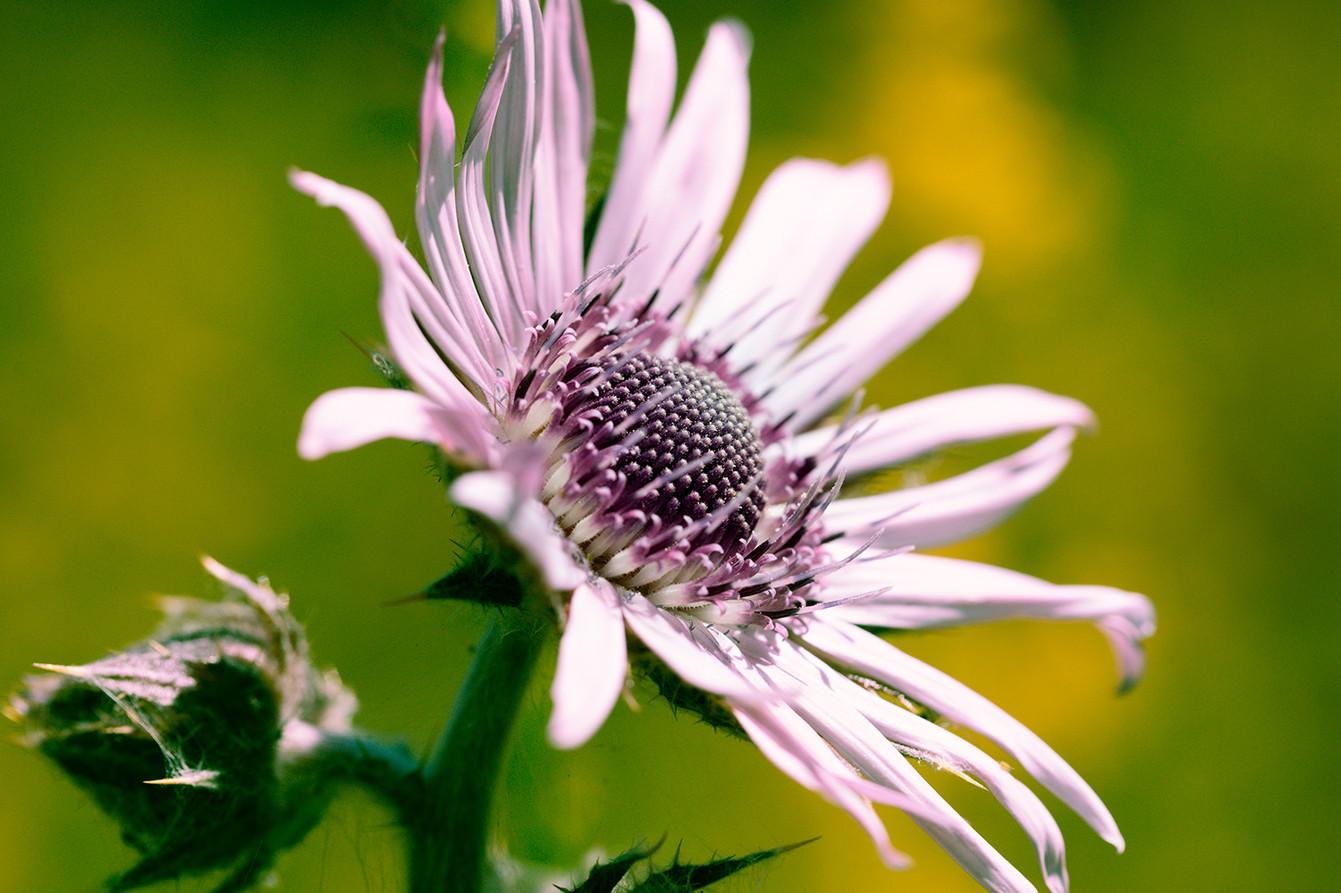 08_Intimate Flowers