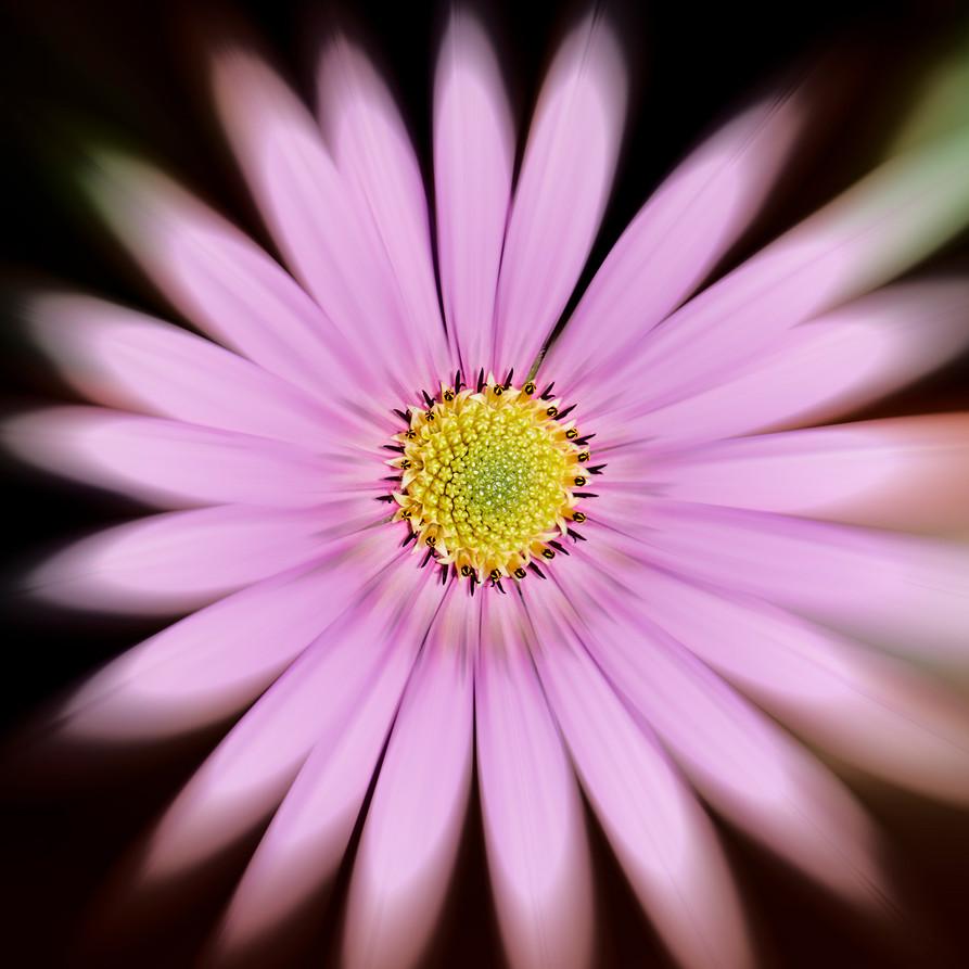 03_Intimate Flowers