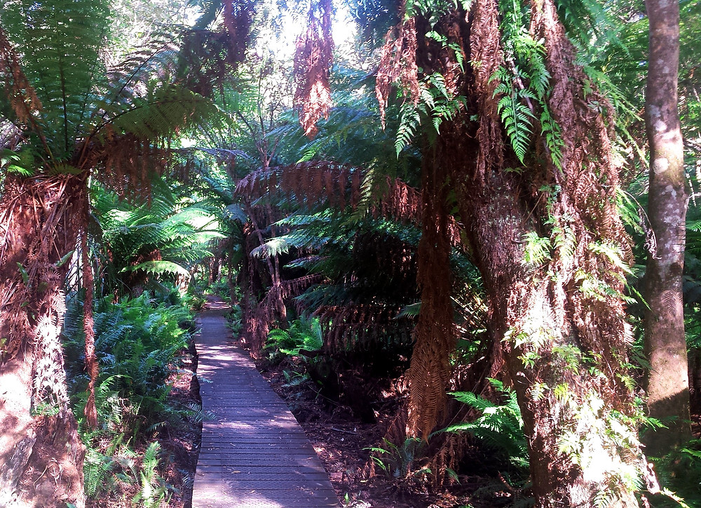 Hiking Track through Sealers Swamp in Wilsons Promontory National Park