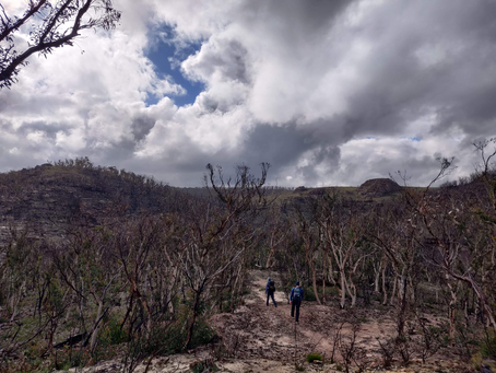 Wollangambe Crater: Coming back after the 2019–20 bushfire season