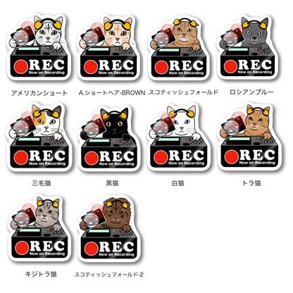 ドラレコ-猫.jpg
